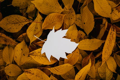 Cutout paper leaf on natural fallen foliage