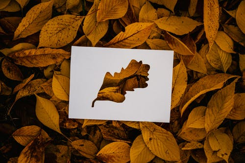 Simple cutout card on fallen foliage