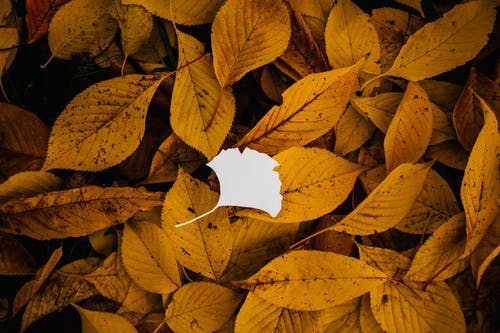Small paper leaf on fallen foliage