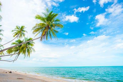 Photo of Green Palm Trees Near the Sea
