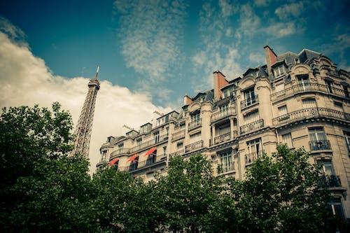 Photos gratuites de arbres, architecture, bâtiment, building