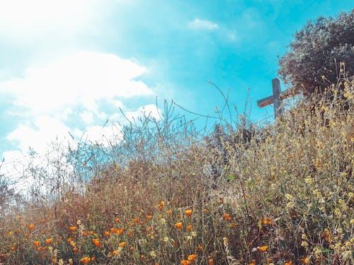 Безкоштовне стокове фото на тему «campo, cemento, cerro, cielo»