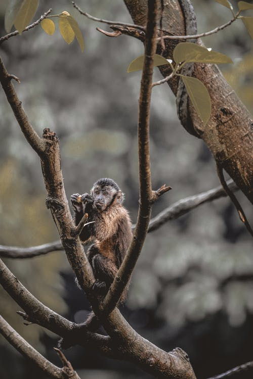 Full body funny fluffy monkey sitting on thin tree branch in wild nature and looking away with interest
