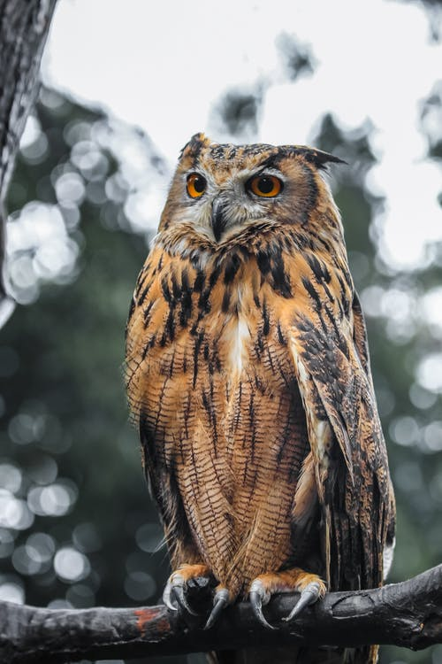 Proud eagle owl sitting on tree branch