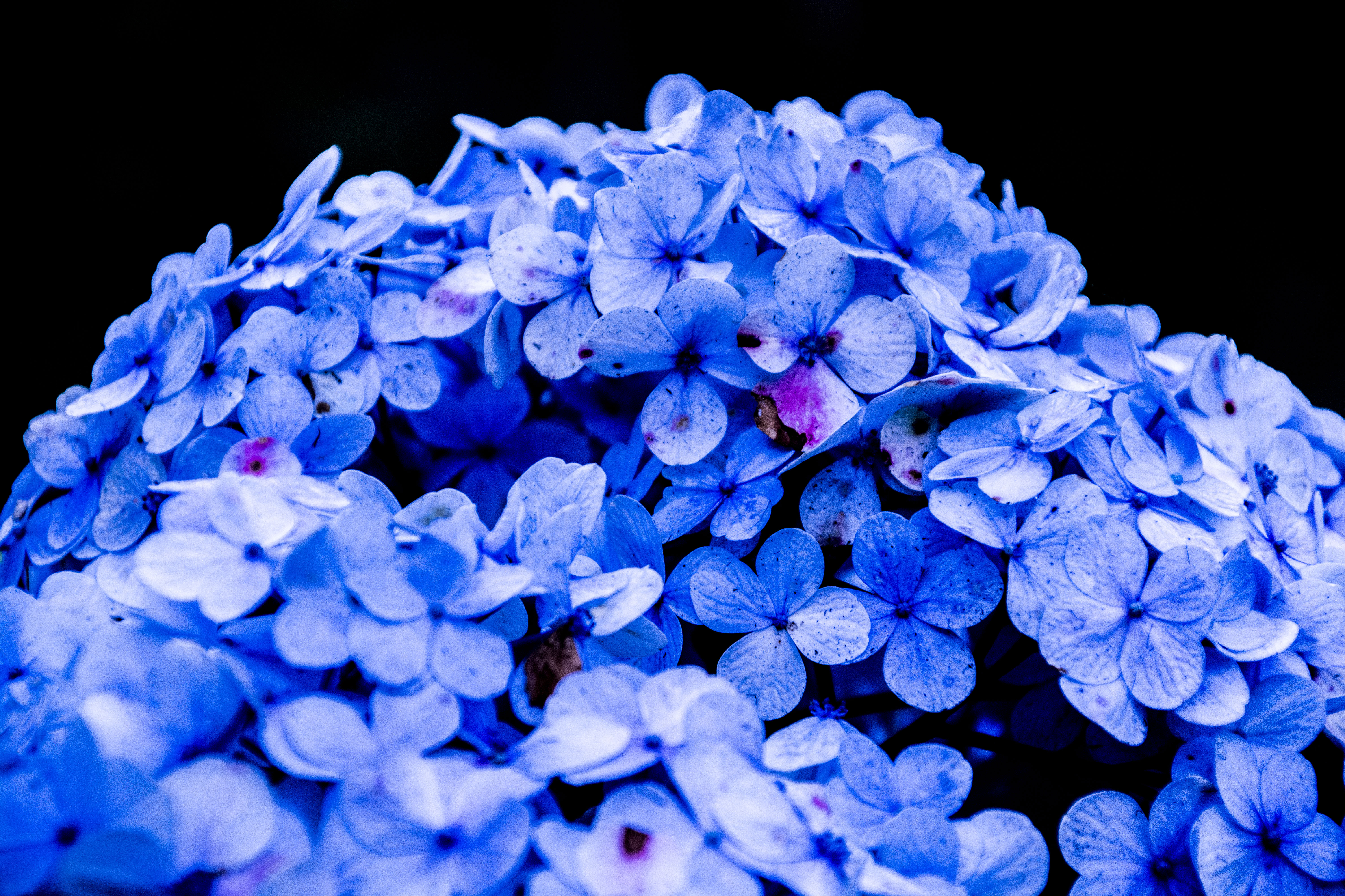 Flowers Blue Forteforic