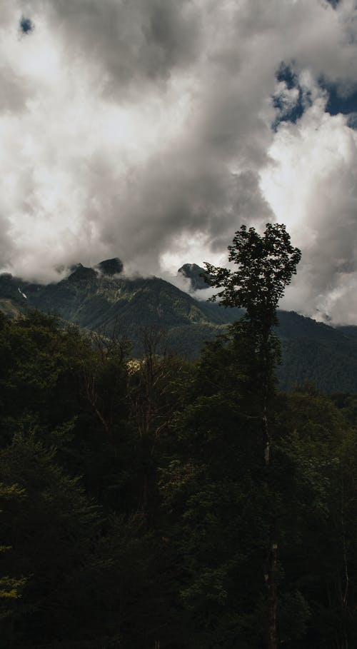 Trees on mountain under cloudy sky in evening