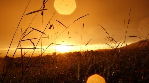 คลังภาพถ่ายฟรี ของ ข้าวสาลี, ตะวันลับฟ้า, ท้องฟ้า, ทุ่งหญ้า