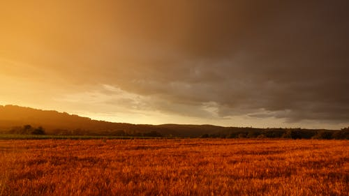 Gratis stockfoto met akkerland, boerderij, dageraad, daglicht