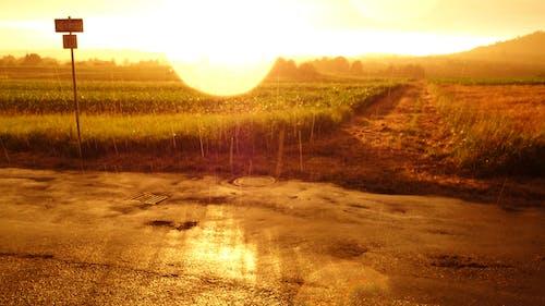 Foto d'estoc gratuïta de camps, lent mullada, pluja