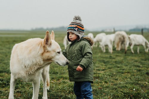 A Boy with His Dog  in the Field