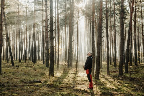 Elderly Man Standing on the Forest