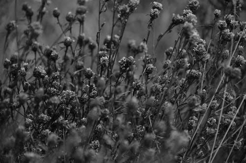 A Photo of a Flower Field