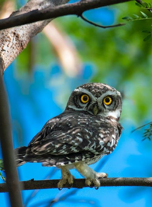 Fotos de stock gratuitas de al aire libre, ala, animal