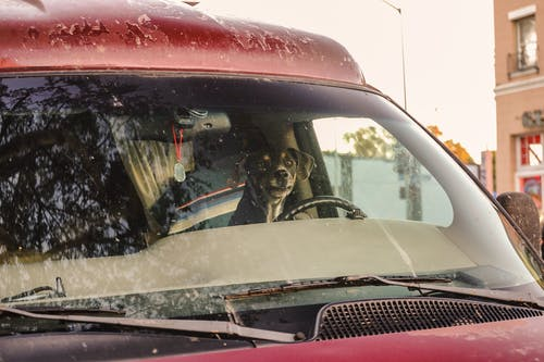 A Dog Riding a Car