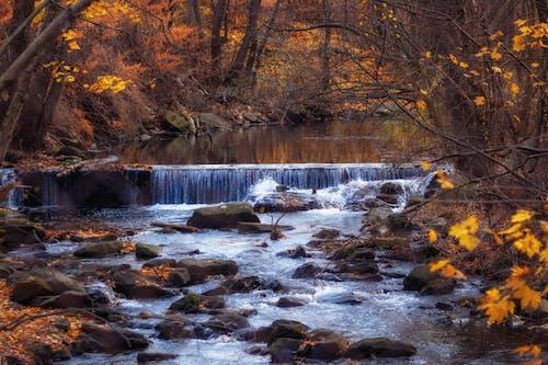 季節, 秋, 自然の美しさの無料の写真素材