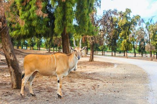 Graceful antelope standing in green garden