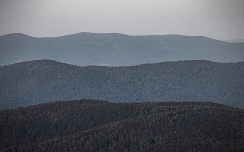 Long Shot of Green Trees in the Mountains