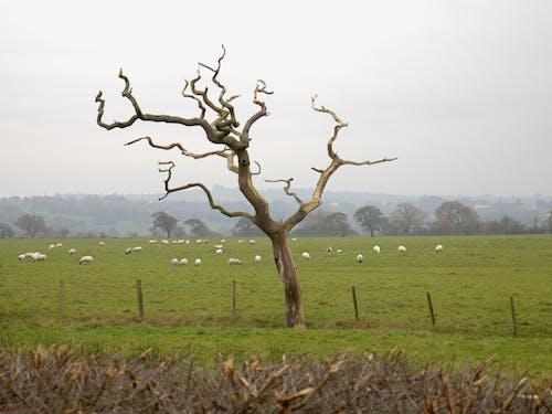Foto stok gratis alam, batang pohon, binatang