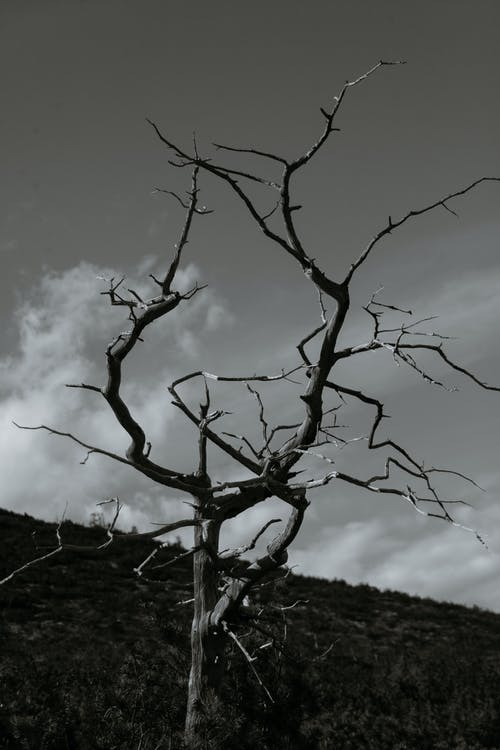 Dry bare tree growing in mountainous terrain