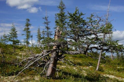 Fragile trees growing on grassy hill slope under blue sky