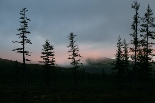 Picturesque scenery of silhouettes of fir trees growing near mountain hidden under thick fog at sunset