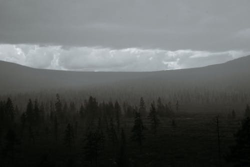Fog over forest growing on mountain range