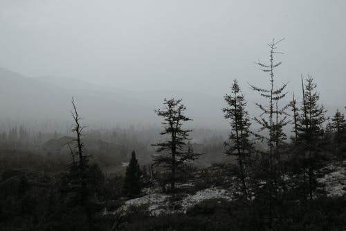 Mountain ridge covered with trees against misty sky