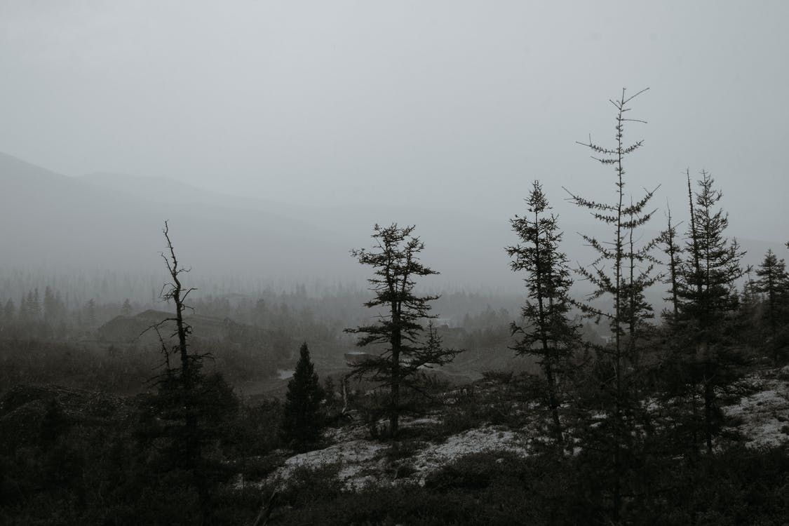 Black and white silhouettes of trees growing on rough terrain near mountain ridge hidden under thick fog