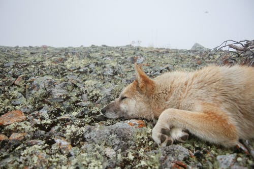 Cute abandoned dog sleeping on mossy ground in bare forest on cloudy day