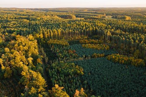 Gratis stockfoto met bomen, Bos, bosgebied
