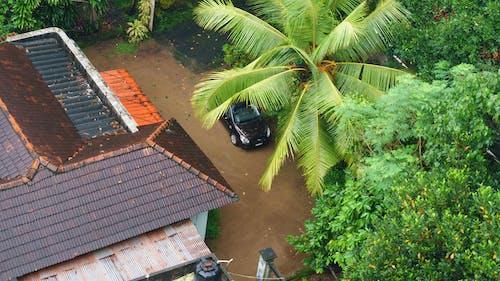 Δωρεάν στοκ φωτογραφιών με hyundai, αμίαντο, αυτοκίνητο, δέντρα καρύδας