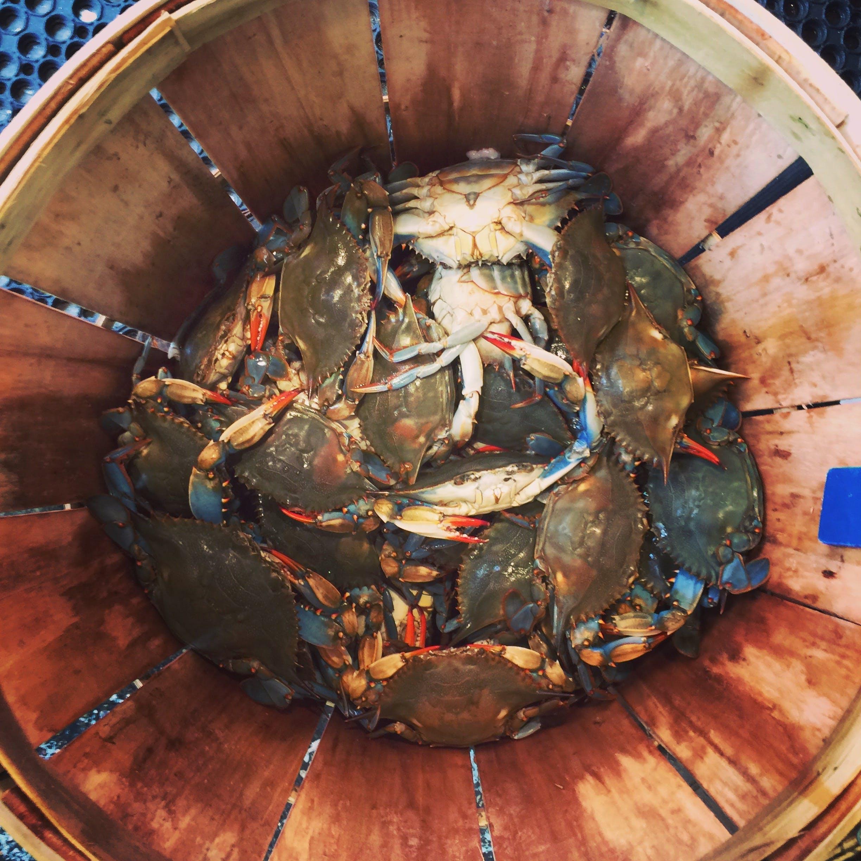 Kostenloses Stock Foto zu krabben, meeresfrüchte, schaltier