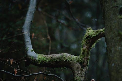 Бесплатное стоковое фото с ветвь, вода, дерево, дневной свет