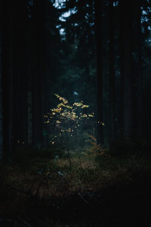 Бесплатное стоковое фото с дерево, дневной свет, жуткий, легкий