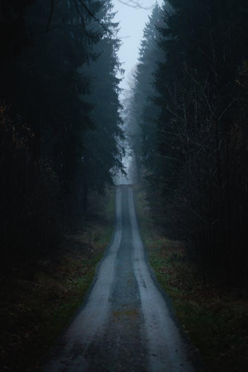 Бесплатное стоковое фото с дерево, дневной свет, дорога, живописный