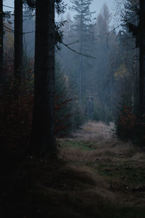Бесплатное стоковое фото с вечнозеленый, дерево, живописный, жуткий