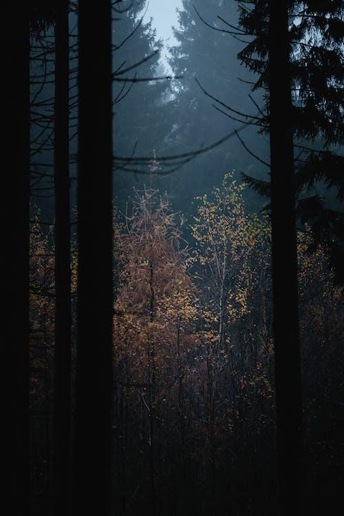Бесплатное стоковое фото с дерево, закат, зима, легкий