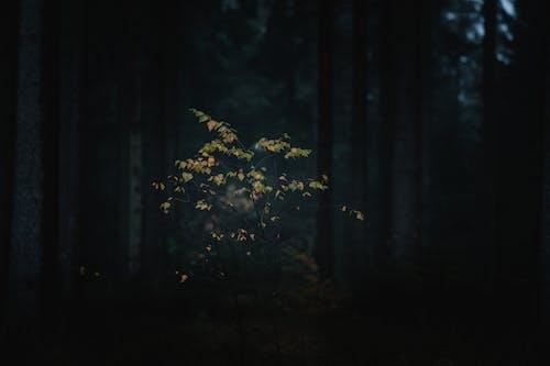 Бесплатное стоковое фото с абстрактный, вечер, дерево, жуткий