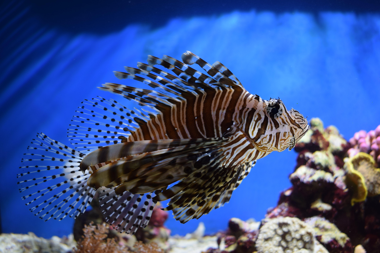 Free stock photo of animal, fish, nikon d3300