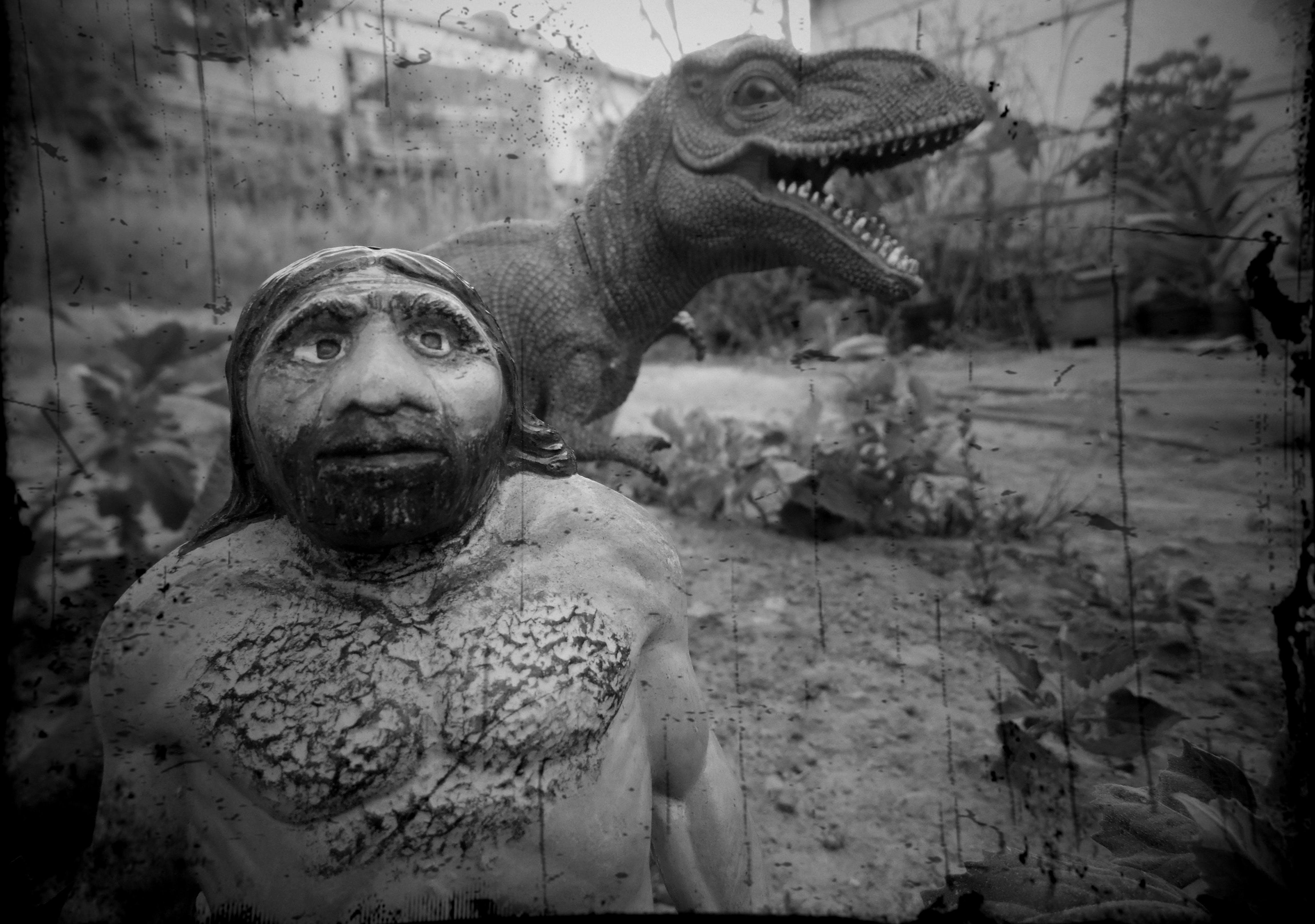 Free stock photo of Cavernicola, Dinosaurio, juguete