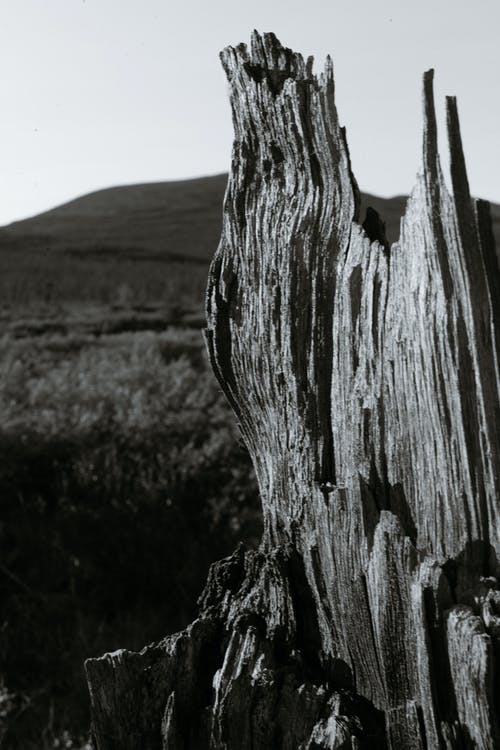 Black and white of aged dried broken trunk of tree located in middle of field