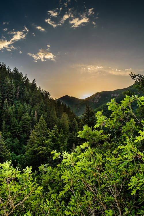 Green Trees on the Mountain