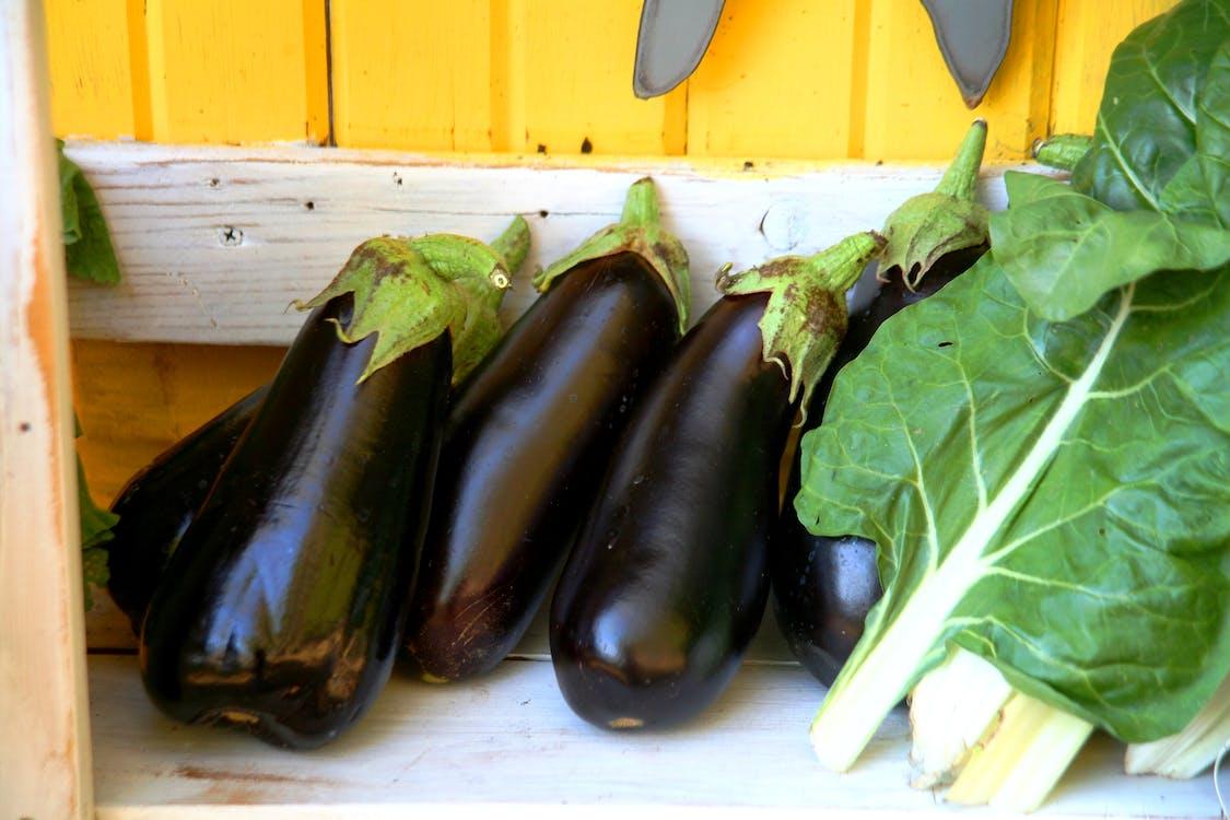 Free stock photo of aubergines