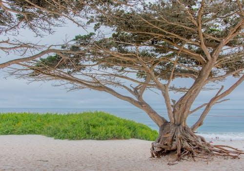 나무, 바다, 성숙한의 무료 스톡 사진