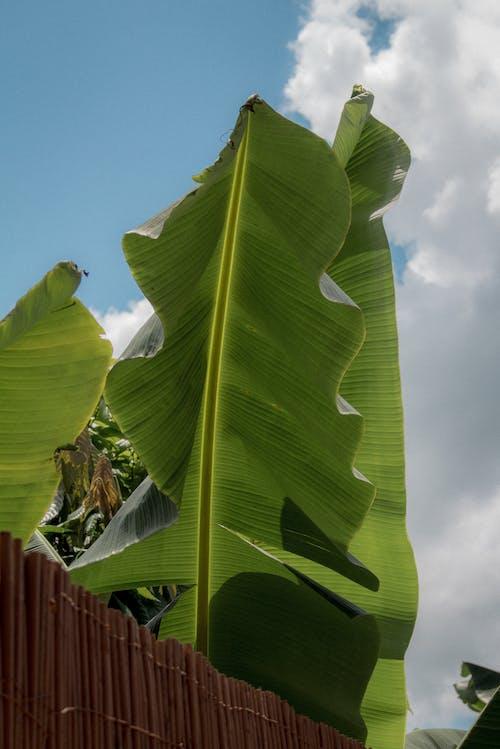 Free stock photo of 4k wallpaper blue, aesthetic, background, banana leaves