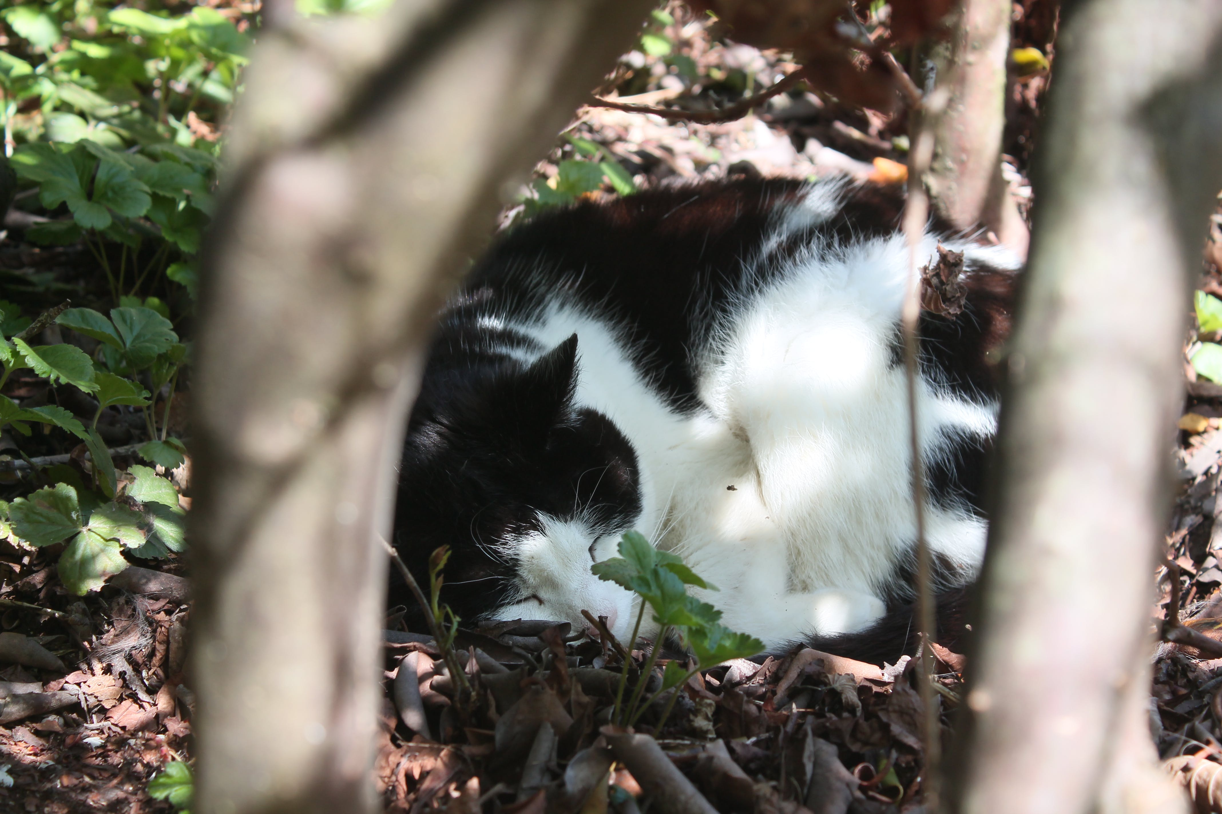 Free stock photo of cat, forest, sleeping