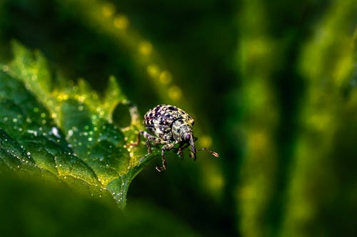White and Black Spotted Beetle on Green Leaf in Close Up Photography