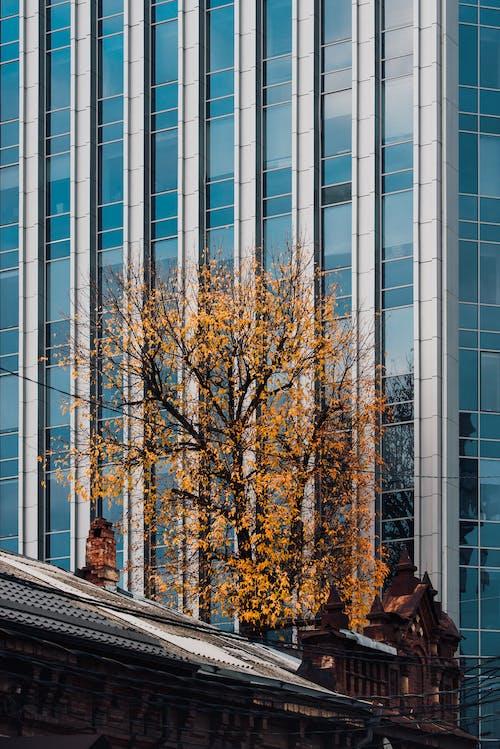 Imagine de stoc gratuită din afaceri, apartament, arbore, arhitectură