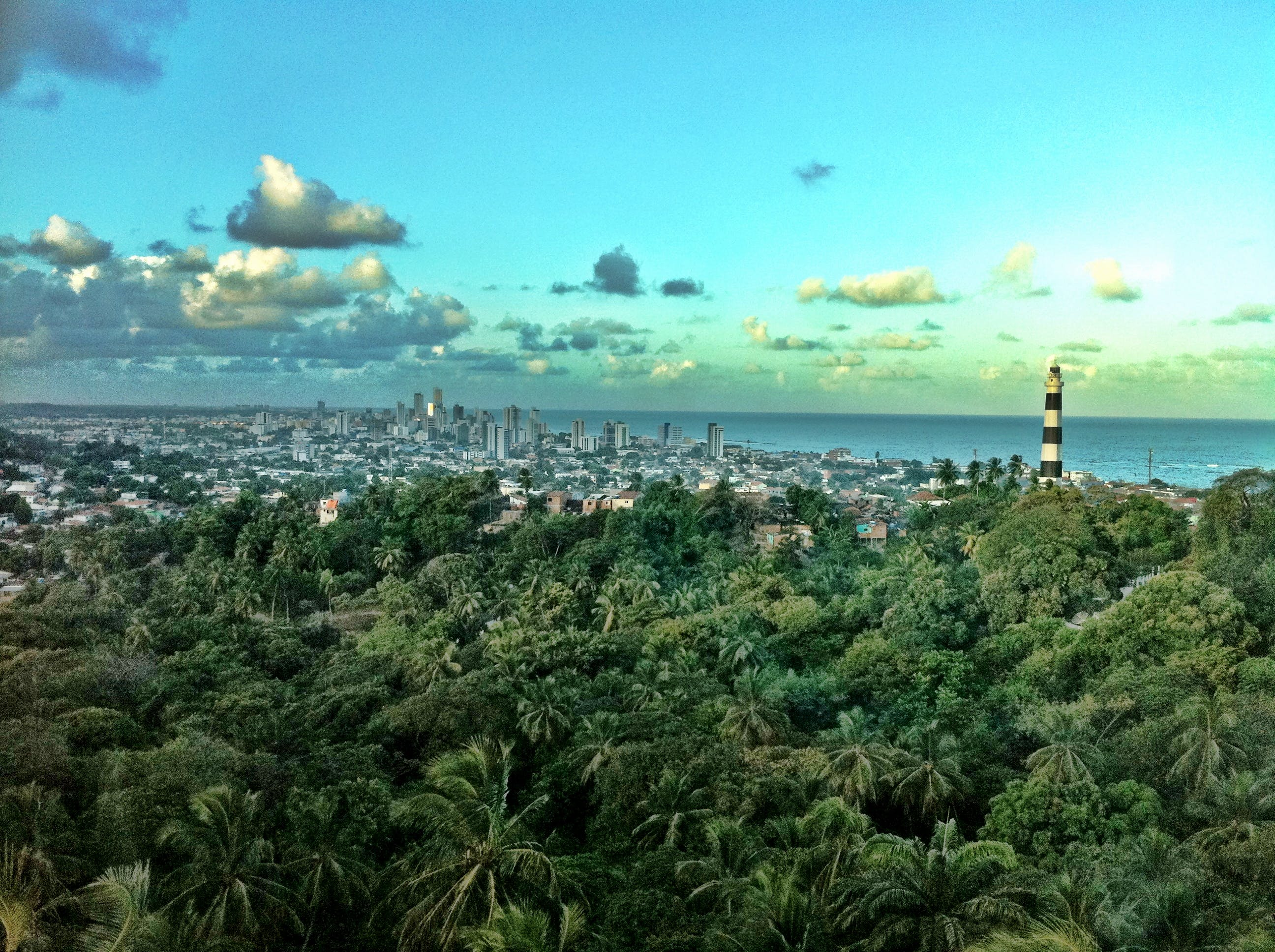 Základová fotografie zdarma na téma brazílie, budovy, džungle, les