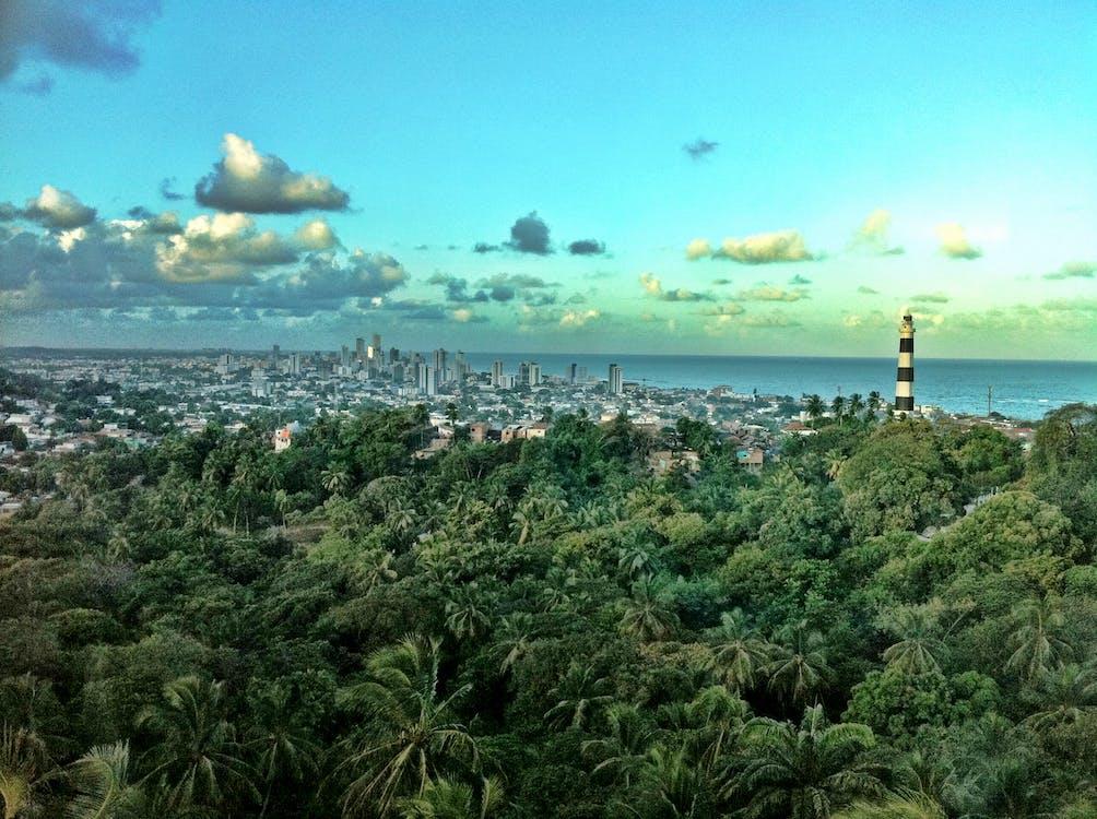 brazylia, budynki, dżungla